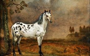 "Picture picture, canvas, Paulus Potter, oil, ""Spotted horse"", Dutch artist"