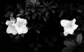 Picture leaves, darkness, white