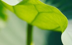 Wallpaper edge, sheet, Green