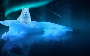 Picture Night, Ice, Wolf, Fiction