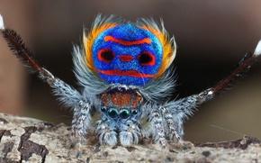 Picture photo, spider, spider, poser