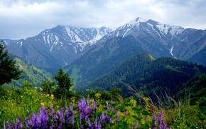 Picture summer, flowers, nature, Mountains, summer, nature, flowers, mountains