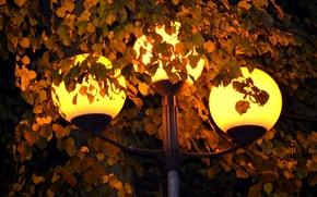 Picture light, lights, yellow, foliage, lantern