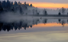 Picture forest, fog, lake, pond, surface, dawn, morning