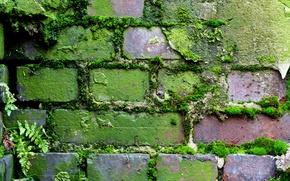 Picture wall, pattern, brick, moss