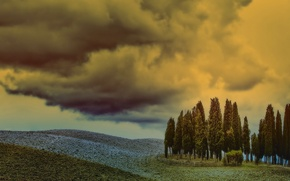 Picture field, the sky, trees, landscape