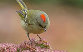Picture bird, color, feathers, beak