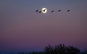 Picture birds, night, pack, The moon, USA, New Mexico, San Antonio