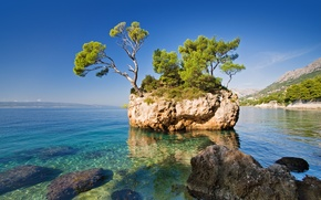 Picture sea, nature, rock, tree, the rock, the sea, the nature, a tree