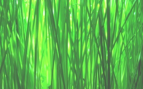 Wallpaper green, grass, macro