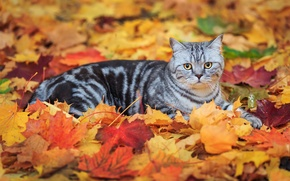 Picture cat, leaves, striped