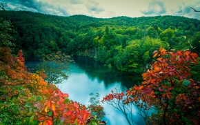 Picture forest, leaves, lake, branch, red