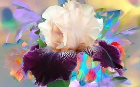 Picture macro, rendering, petals, iris