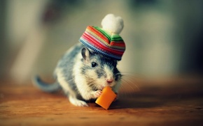 Picture hat, cheese, rat