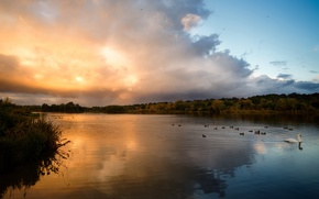 Picture the sky, grass, water, clouds, rays, light, trees, landscape, sunset, birds, clouds, nature, lake, pond, …