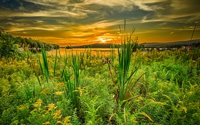 Picture the sky, grass, clouds, sunset, lake, PA, Pennsylvania