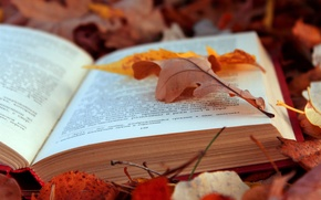 Picture LEAVES, TEXT, AUTUMN, FOLIAGE, BOOK, PAGE