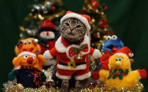 Picture cat, cat, mustache, holiday