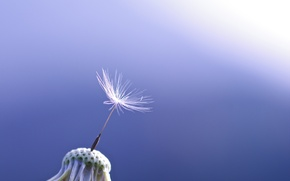 Picture macro, blue, background, dandelion, one