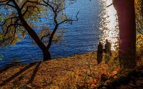 Picture sadness, autumn, pond, Park, tree, pair