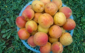 Picture fruit, fruit, yummy, vitamins, apricots, the gifts of summer