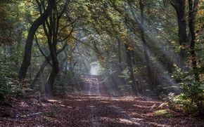 Picture road, autumn, forest, the sun's rays