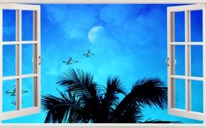 Picture Blue, Beach, Ocean, Window, Tropical, Palms, Seashore