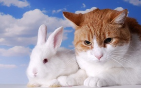Picture white, the sky, cat, clouds, cats, rabbit, red, pair, unhappy, two, two, rodents, friendship apart