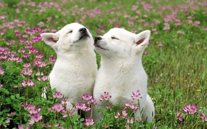 Picture Flowers, Puppies, Grass