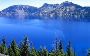 Picture landscape, nature, pine
