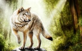 Picture forest, wolf, predator, handsome