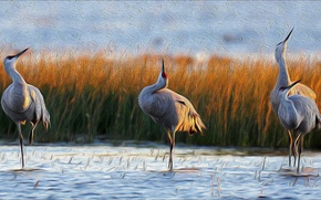 Picture Birds, beautiful, painting, cranes