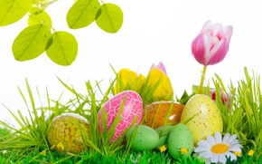 Picture flowers, eggs, Easter, tulips, Easter