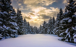Picture winter, forest, snow, Norway