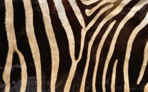Picture fur, texture, animal texture, background desktop
