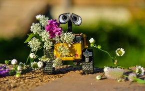 Picture summer, flowers, WALL-E, WALL-E