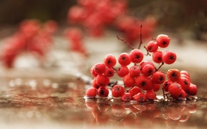 Picture macro, berries, background