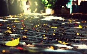 Picture autumn, the city, stones, foliage, macadam