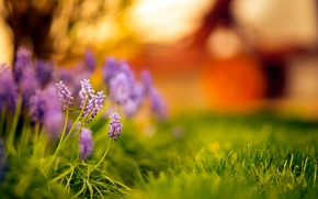 Wallpaper bokeh, grass, flowers, sunset