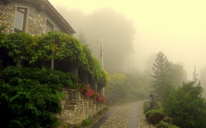 Picture greens, trees, flowers, the city, fog, morning, village, macadam