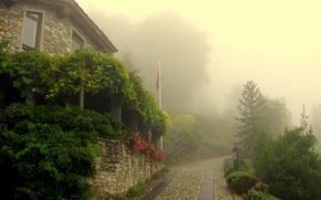 Wallpaper greens, trees, flowers, the city, fog, morning, village, macadam