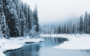 Picture winter, forest, snow, nature, river