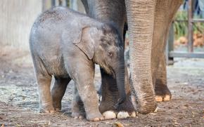 Picture elephant, zoo, baby