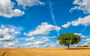 Picture field, the sky, clouds, tree