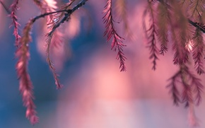Picture leaves, pink, bokeh, twigs