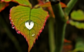 Picture leaves, water, macro, red, green, Rosa, background, widescreen, Wallpaper, drop, blur, leaf, wallpaper, leaf, drop, …