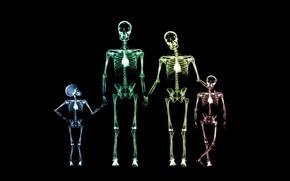 Wallpaper family, skeleton, x-ray