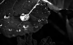 Picture Water, Macro, Reflection, Leaf, Black and white, Droplet