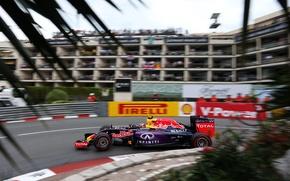 Picture Formula 1, monaco, Red Bull Racing, Daniil, Kvyat, Kvyat, Daniel, RB11