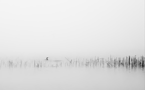Picture fog, background, bird, reed